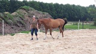 Klant en paard